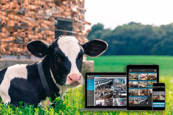 ventajas de las granjas inteligentes con cámaras de vigilancia